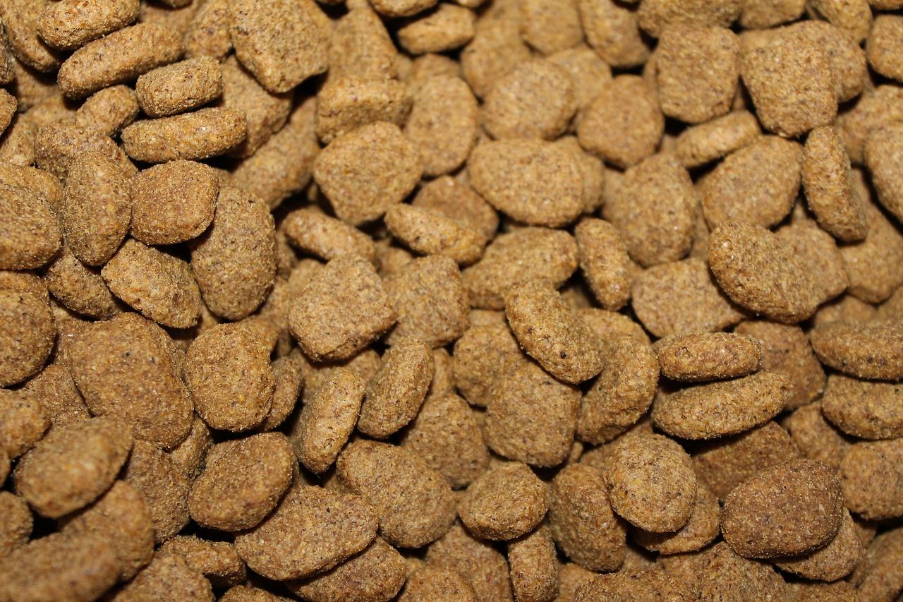 מה עדיף - שאריות או אוכל מיוחד לכלבים?