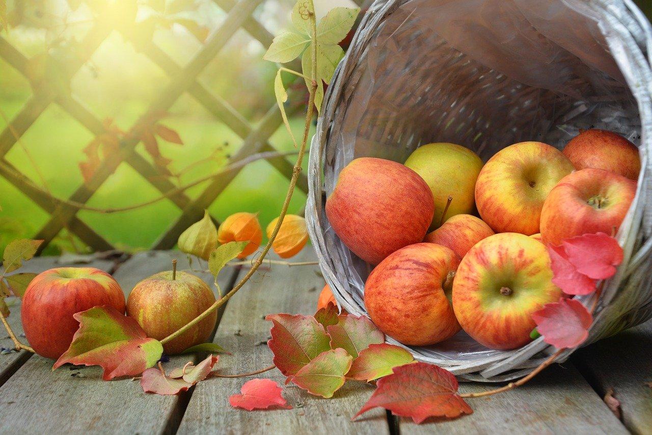 כך תדאגו שהפירות יישארו טריים אחרי שארזתם במגש